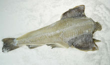 SALTED COD- FISH FOR SALE. Bacalao