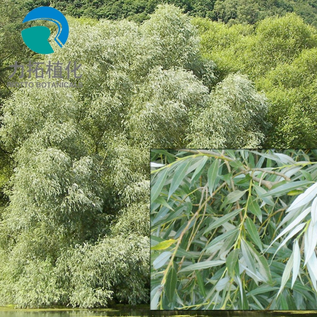 Professional Supplier supply Top Quality White Willow Bark Extract, Best salicin 10%-98%