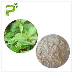 Anti-oxidation Polyphenols Green Tea Extract EGCG CAS 989-51-5 for Dietary Supplement