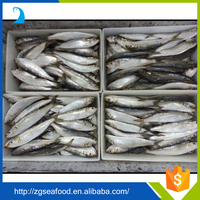 Nutritious Seafood Frozen QS Sardine Fish and sardines process canning