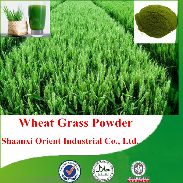 Best choice 100% natural and organic wheat grass powder with high quality