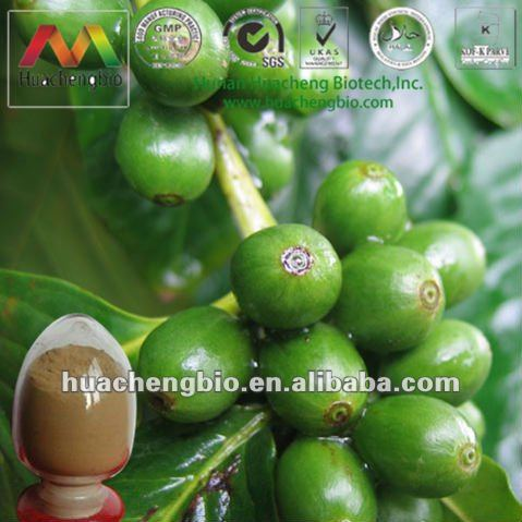 ISO&Kosher 30%~60% Chlorogenic Acid Green Coffee Extract