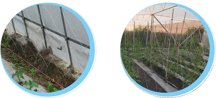 My test Agricultural Fresh vegetable net protected anti-insect net