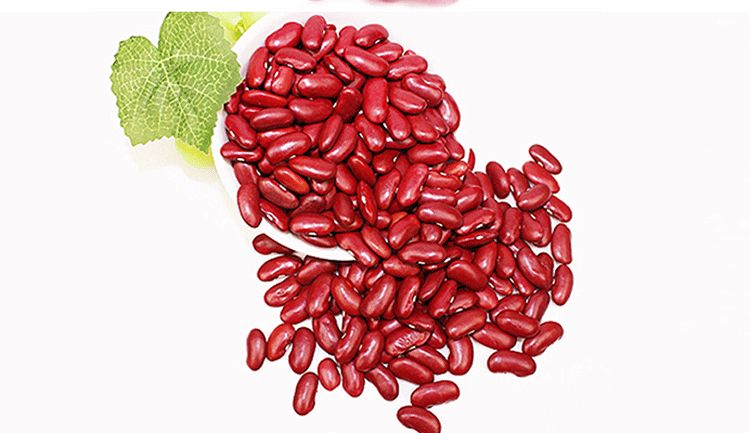 Factory Price Red Kidney Bean with Top Quality