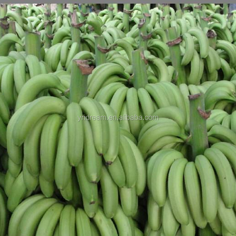 China best export selling wholesale cheap banana price for our best partner