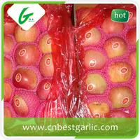 China supplier red bulk red fuji apple