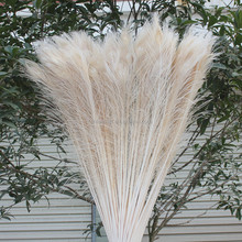 Wholesale Blenched White Peacock Feather 40-45inch Artificial Peacock Feathers