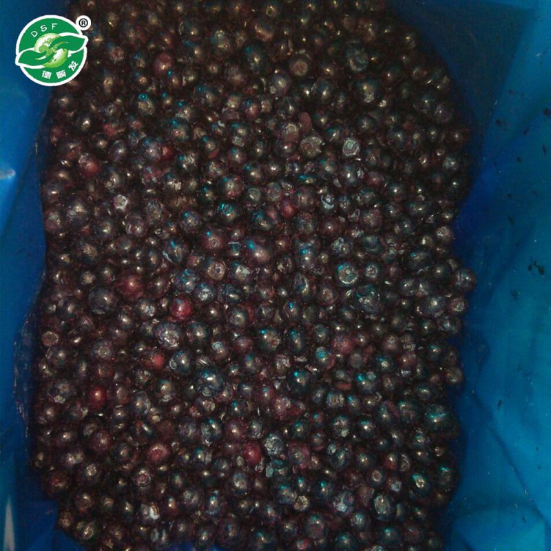 Organic Bulk Iqf Fresh Frozen Blueberry