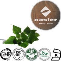 Factory supplier Natural Plant Extract 1%Silicone bete-sitosterol Nettle Leaf Extract Powder with ISO Kosher Certificate