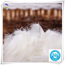 Manufacturer Duck Feather and Down for sale