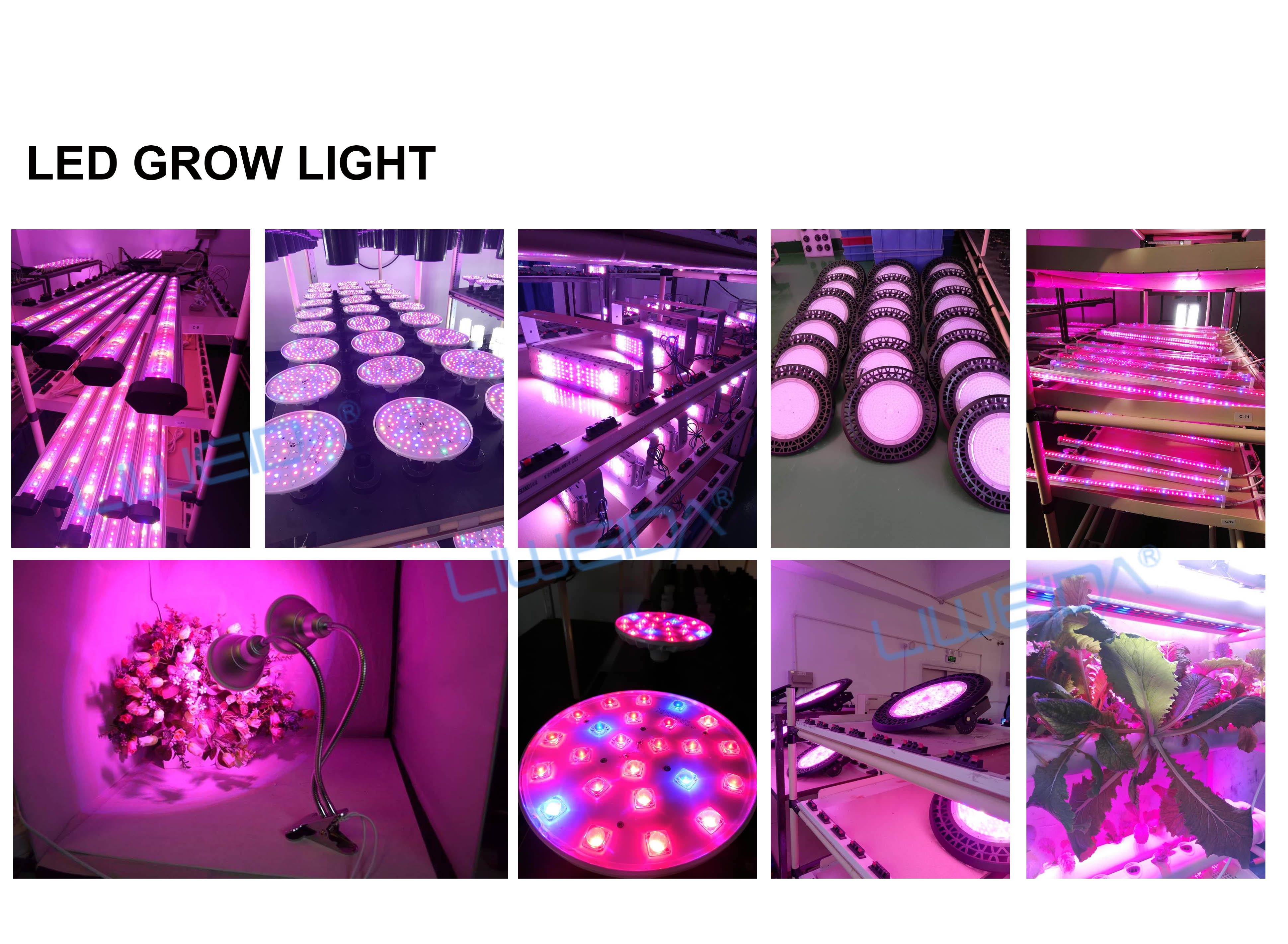 vertical farming Horticulture led linear grow light 250w full spectrum LED grow light for greenhouse plants