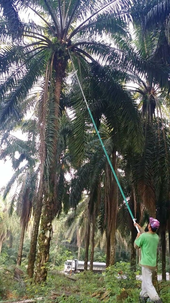 Super light weight Graphite Oil Palm Harvesting Pole