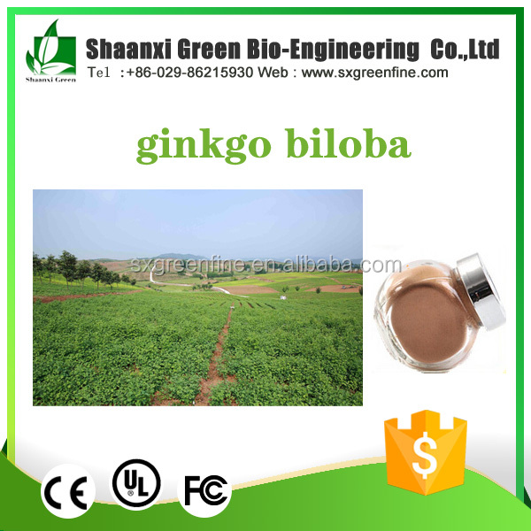 Bulk Supplements Herbal OEM Service Ginkgo Biloba Seed