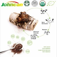 100% Natural Anti-cancer Function Chaga Mushroom Extract/Organic Chaga Extract Powder