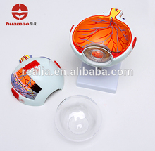 HM-BD-079 6 times Human Eye model for Medical