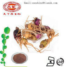 High Quality Maca Root Extract 20:1