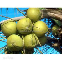 100% Natural saw palmetto extract/fatty acid 25% 45% 85% cas no. 84604-15-9