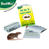 mouse and insect glue trap