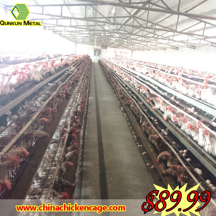 namakkal poultry/lays/poultry farming business plan with bird cage parts