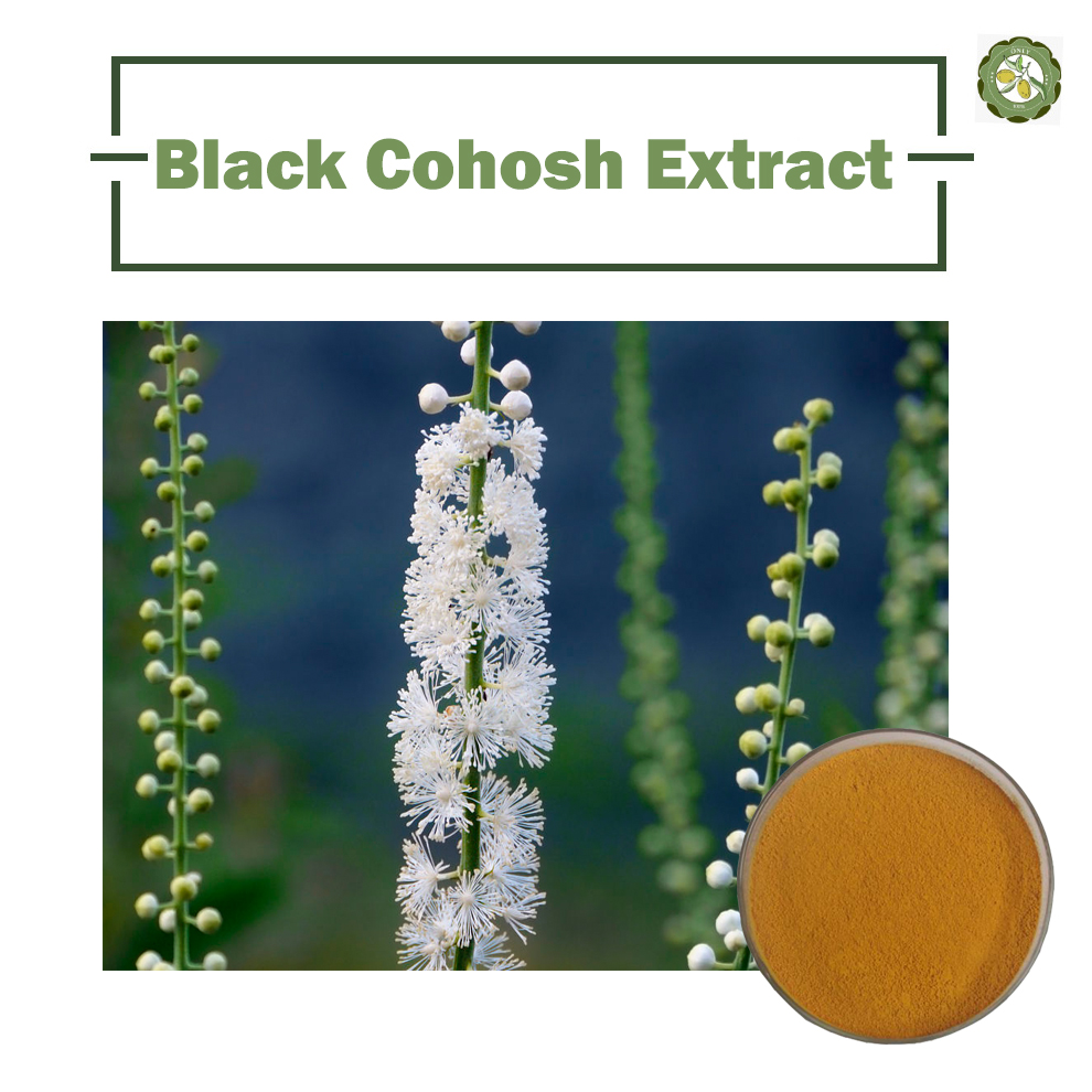 100% natural Black Cohosh Extract/ Black Cohosh P.E with 2.5~5% Triterpene glycosides