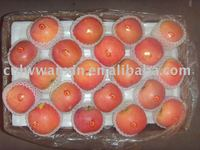 chinese fuji apple exporter