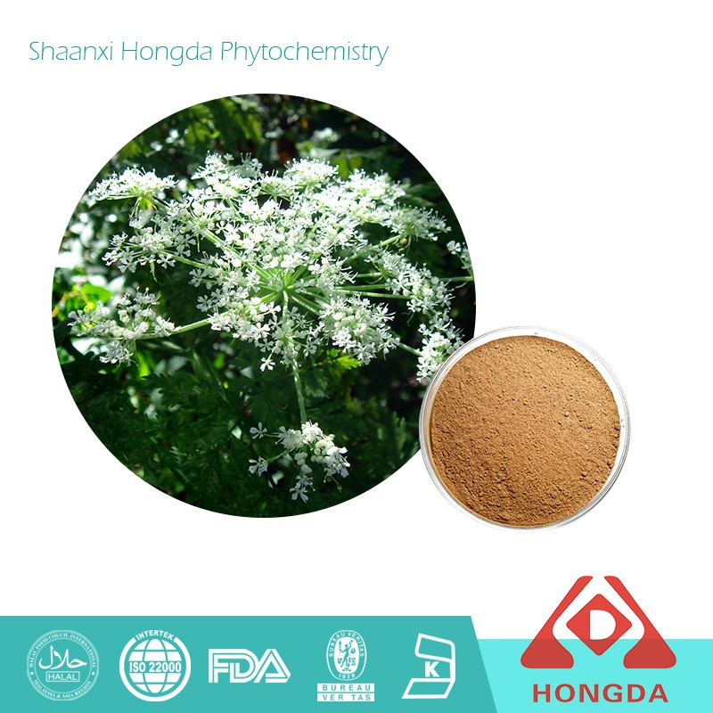 100% Natural Chinese Angelica Extract pure powder/Dong Quai straight powder
