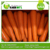 2016 rich nutrition fresh carrot(80-150g)(150-250g up)