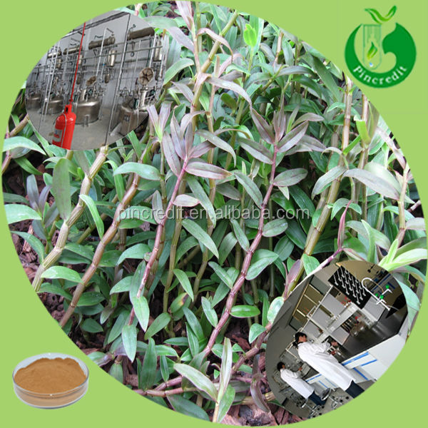 Pure dendrobium 20:1 powder dendrobium extract