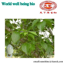 Eucommia 20% Chlorogenic Acid Extract Powder / Hardy Rubber Tree Extract /Gutta-percha Tree pe