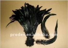 long saddle hackle feathers, roster feathers,