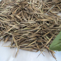 bamboo seeds zi zhu zhong zi hot sales black bamboo seeds
