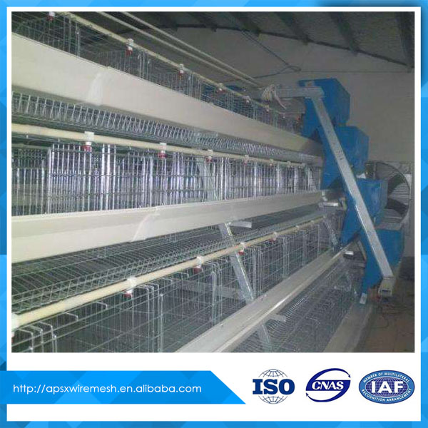 layer hens cage sheds for poultry farm