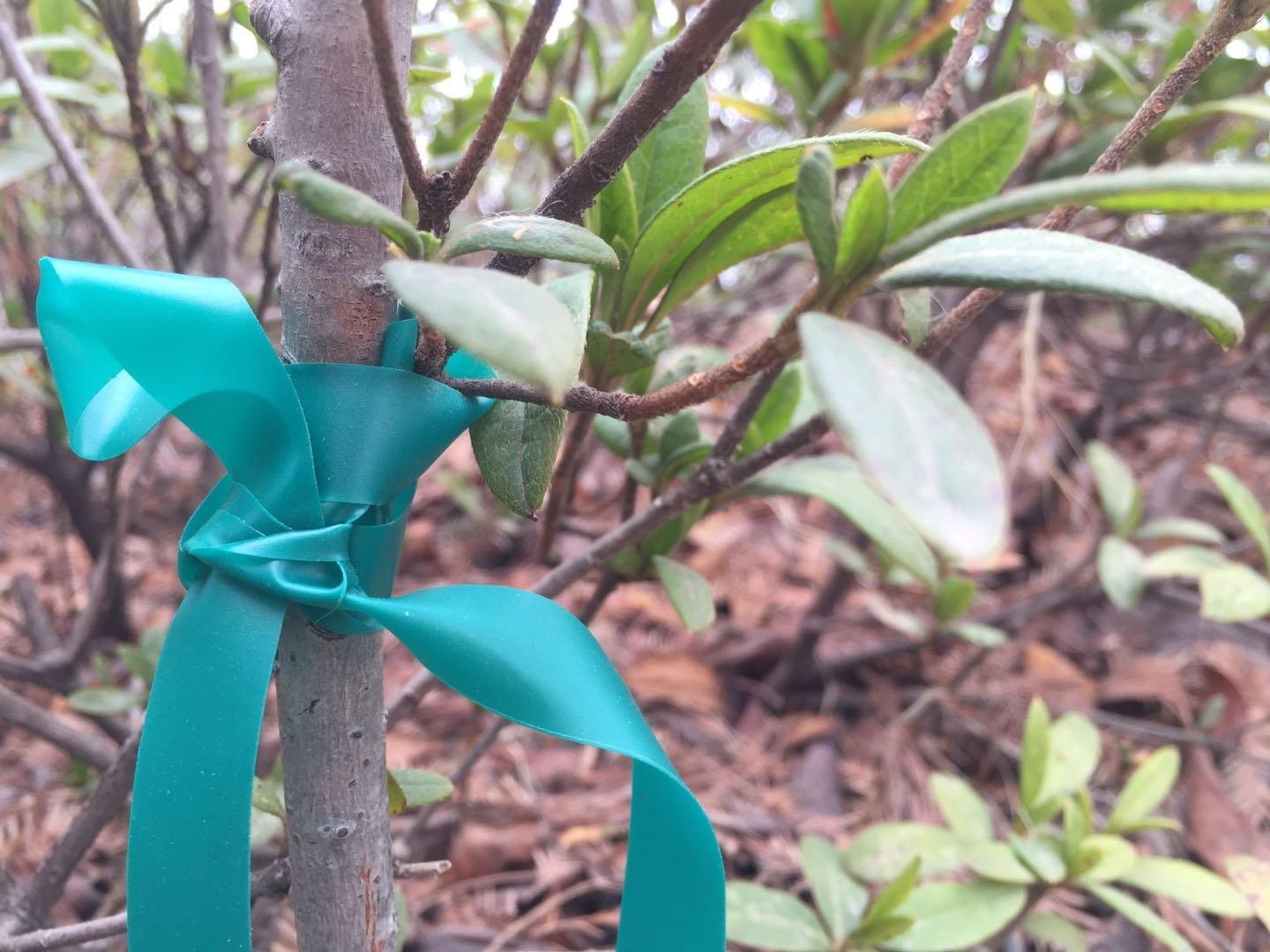 Wholesale Garden Strap PVC Roll Tape Tie Fruit Tree Secateurs Engraft Branch Stake Bind Wide Belt Tools for Graft Plant