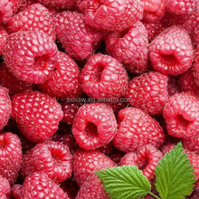 Natural colour plant the new arrival raspberry extract 4% raspberry ketone