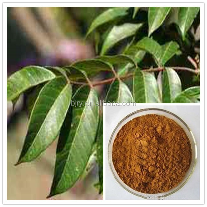 Best price of olive leaf extract/organic water soluble Oleuropein 40%