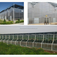 Manufacturer Agriculture Greenhouse Of Hot