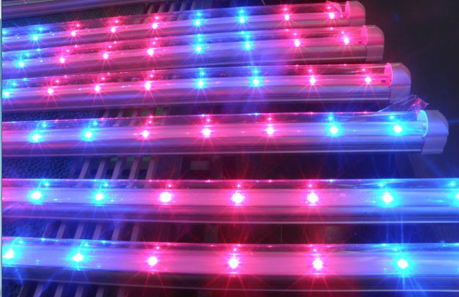 t8 blue/red led plant grow light tu,20w T8 G13 O-shape tube grow light with 660nm 460nm for hydroponics/greenhouse/indoor garden