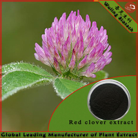 High Quality Free Sampels 8% Isoflavone Red Clover Extract P.E.