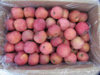 Fresh fuji apple 100 % organic in China