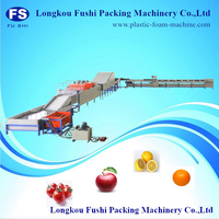 electronic fruit grading machine