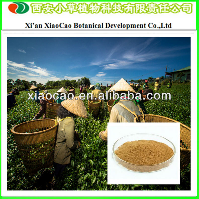 Manufacturer Supply Green Tea Powder/Green Tea P.E./Green Tea Price with 98% Tea Polyphenols