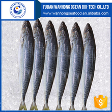 Large stock block shape Pacific mackerel manufacturer