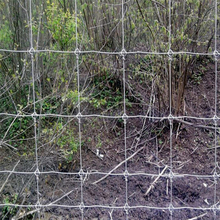 Deer Field Fence / Deer Fence Netting ( Factory)