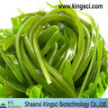 GMP Factory supply Kombu Seaweed Extract 5%- 95% Fucoxanthin