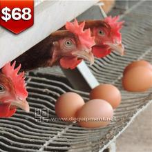 TA NO.1 automatic layer cage/poultry chicken cage for kenya farm