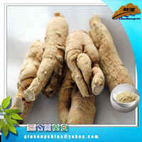100% Nature cni ginseng coffee