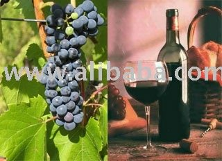 Wines produced in Calabria