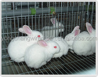 Rabbit cages rabbit farming cages