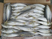 froen yellow tail horse mackerel fish for sale