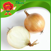 New Seasoned Chinese Yellow Onions